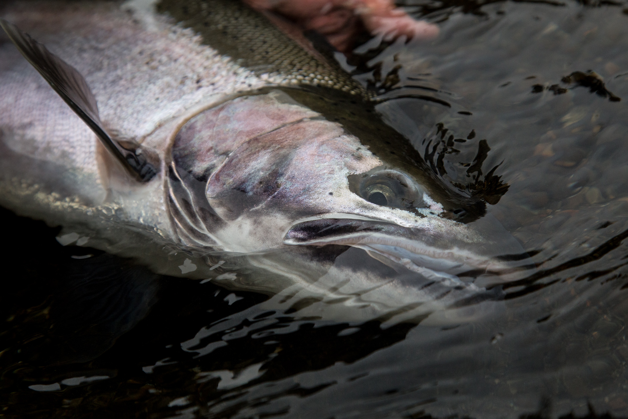 Olympic Peninsula Fly Fishing Guide