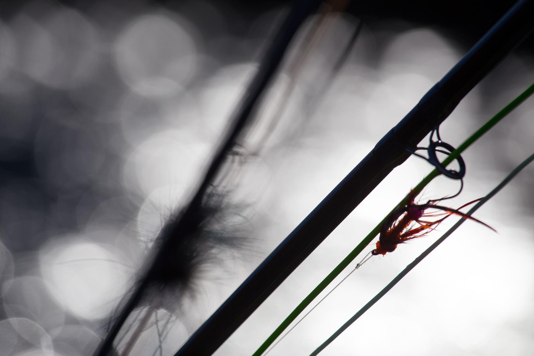 Olympic Peninsula Winter Steelhead Photo Journal. photo Reid Curry.