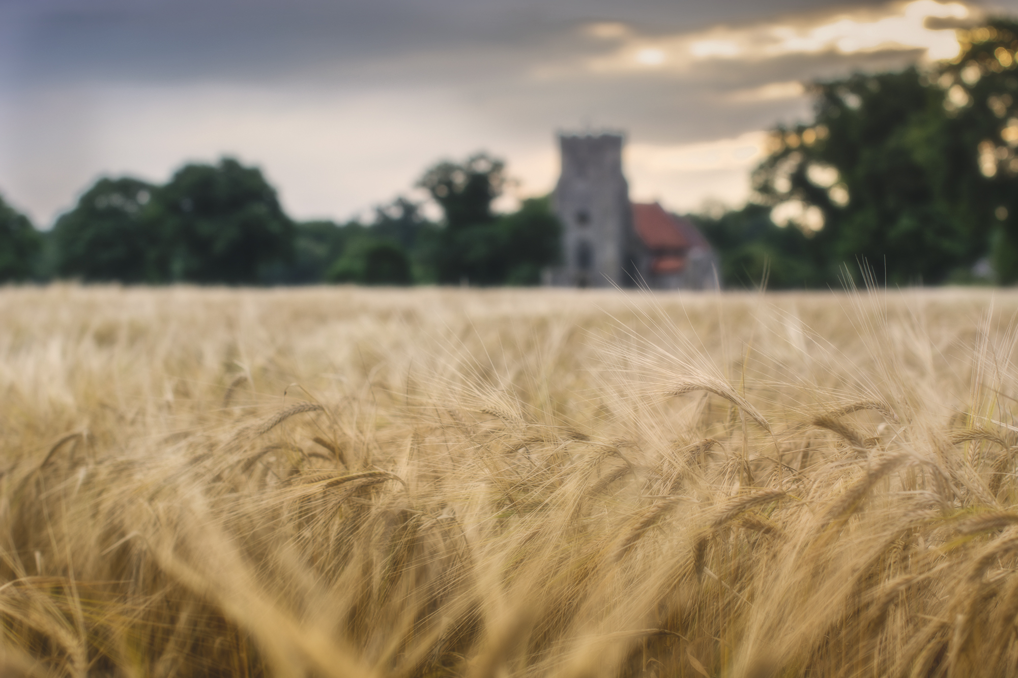 Field by a Church.jpg