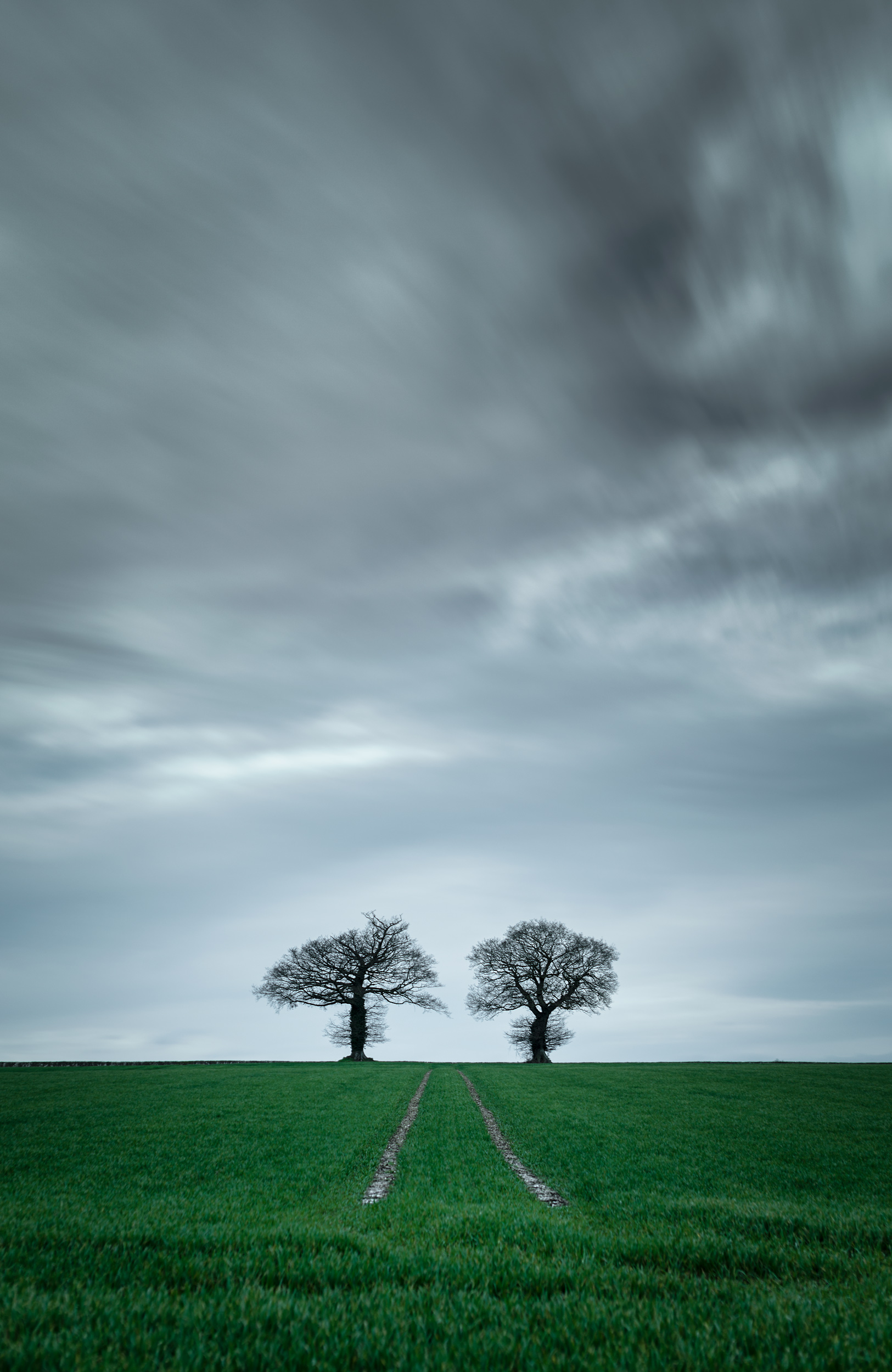 Two-Trees-Under-the-Clouds.jpg