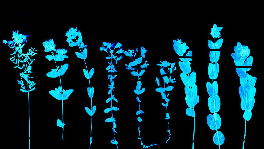 aug17-17-hbr-plants-1200-1024x576.jpg