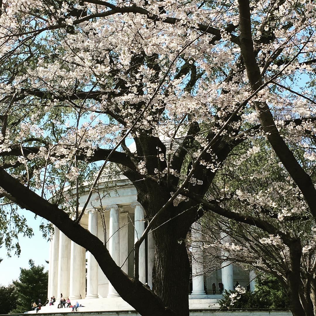 Photo_DC_Jefferson_CherryBlossoms.jpg