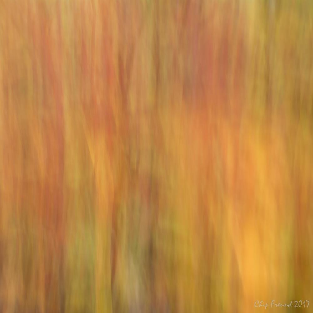 ICM-Fall-Colors-Online-2.jpg