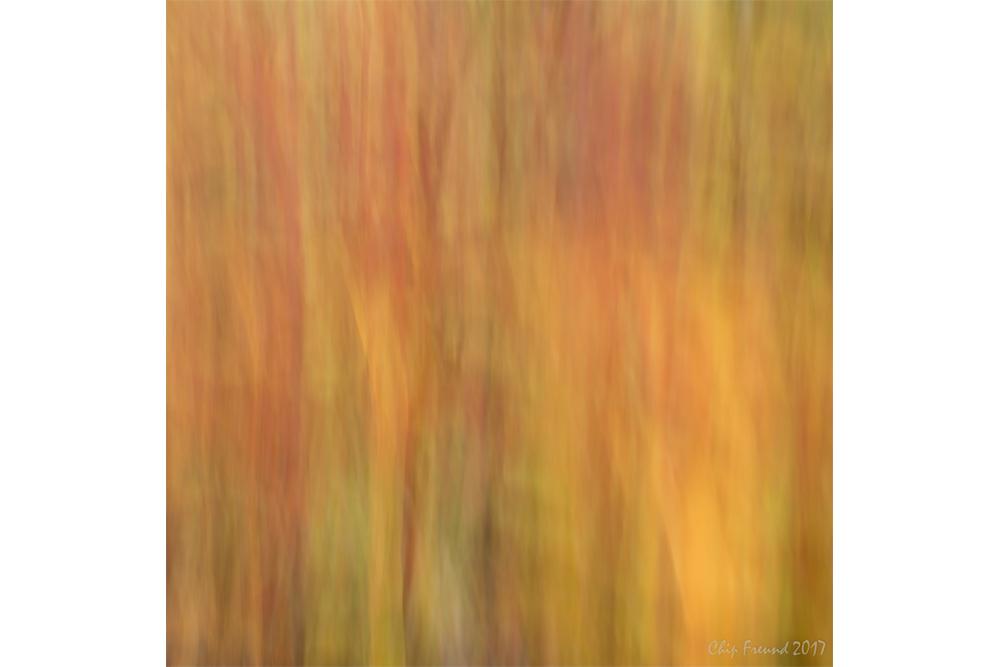 Fall-Color-1000x667.jpg