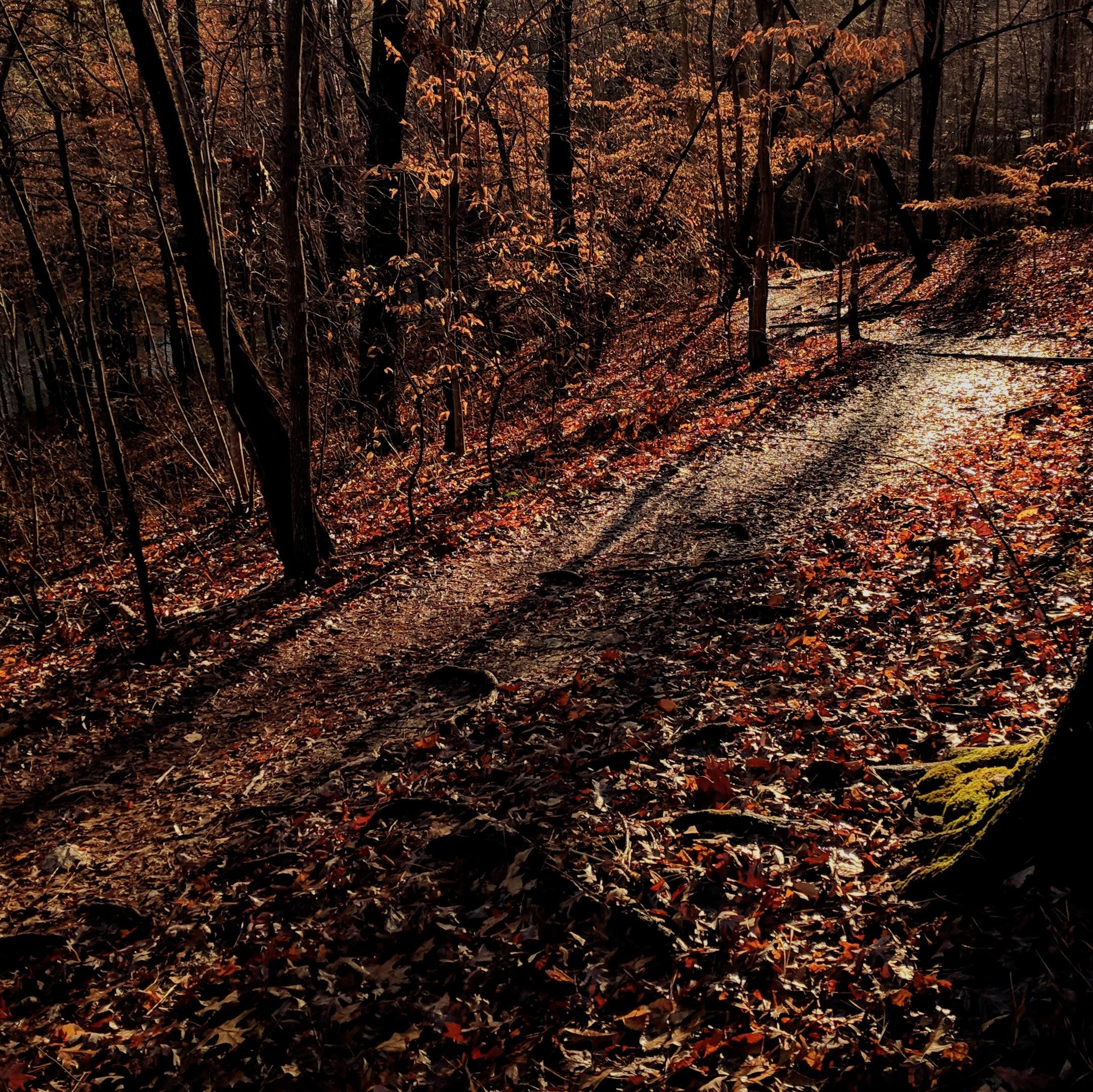 A sunlit path just makes me smile.