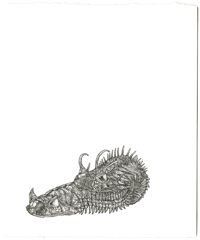 trilobiteslarge.jpg