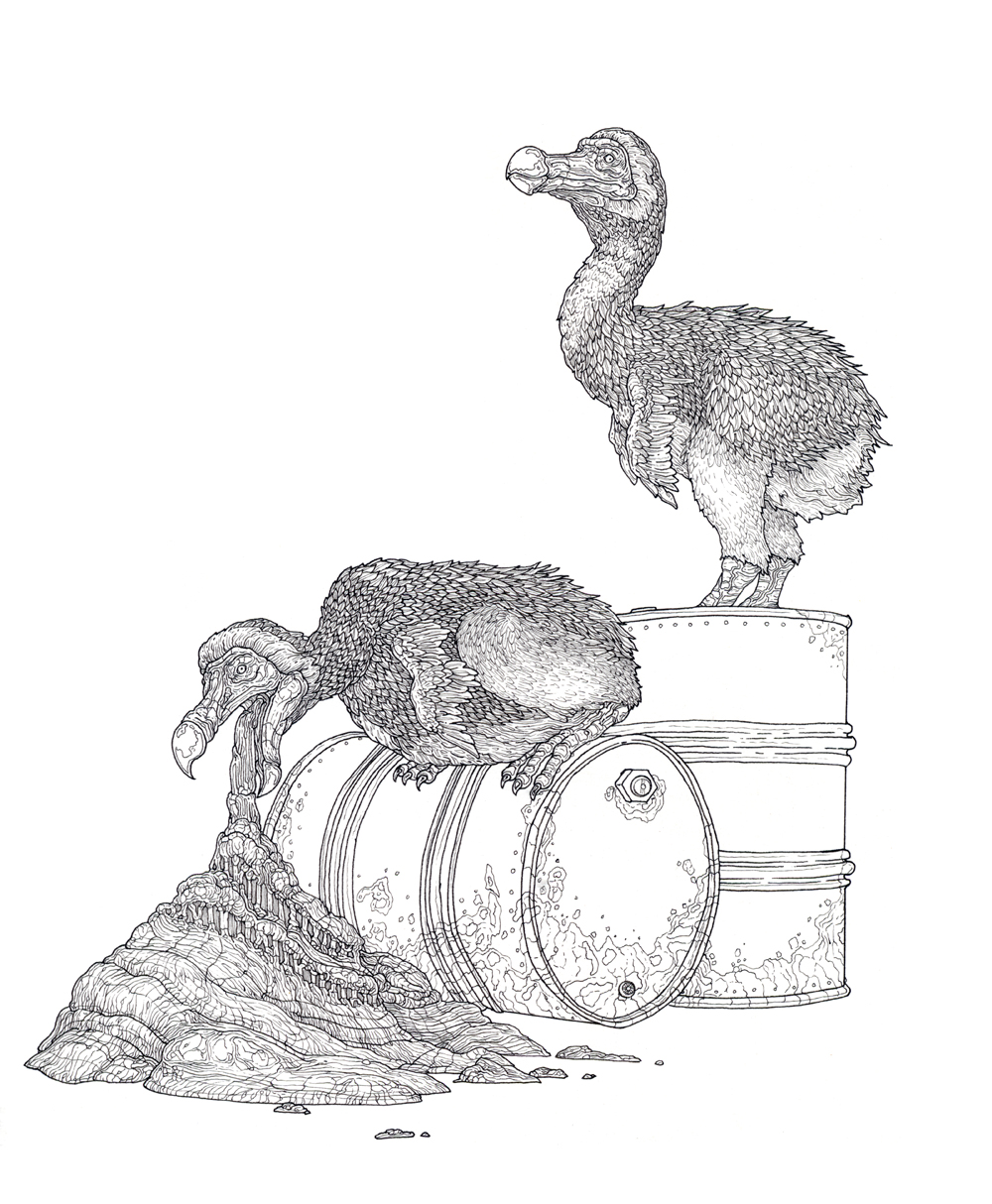 two dodos , ink on paper, 8.5in. x 7in., 2009