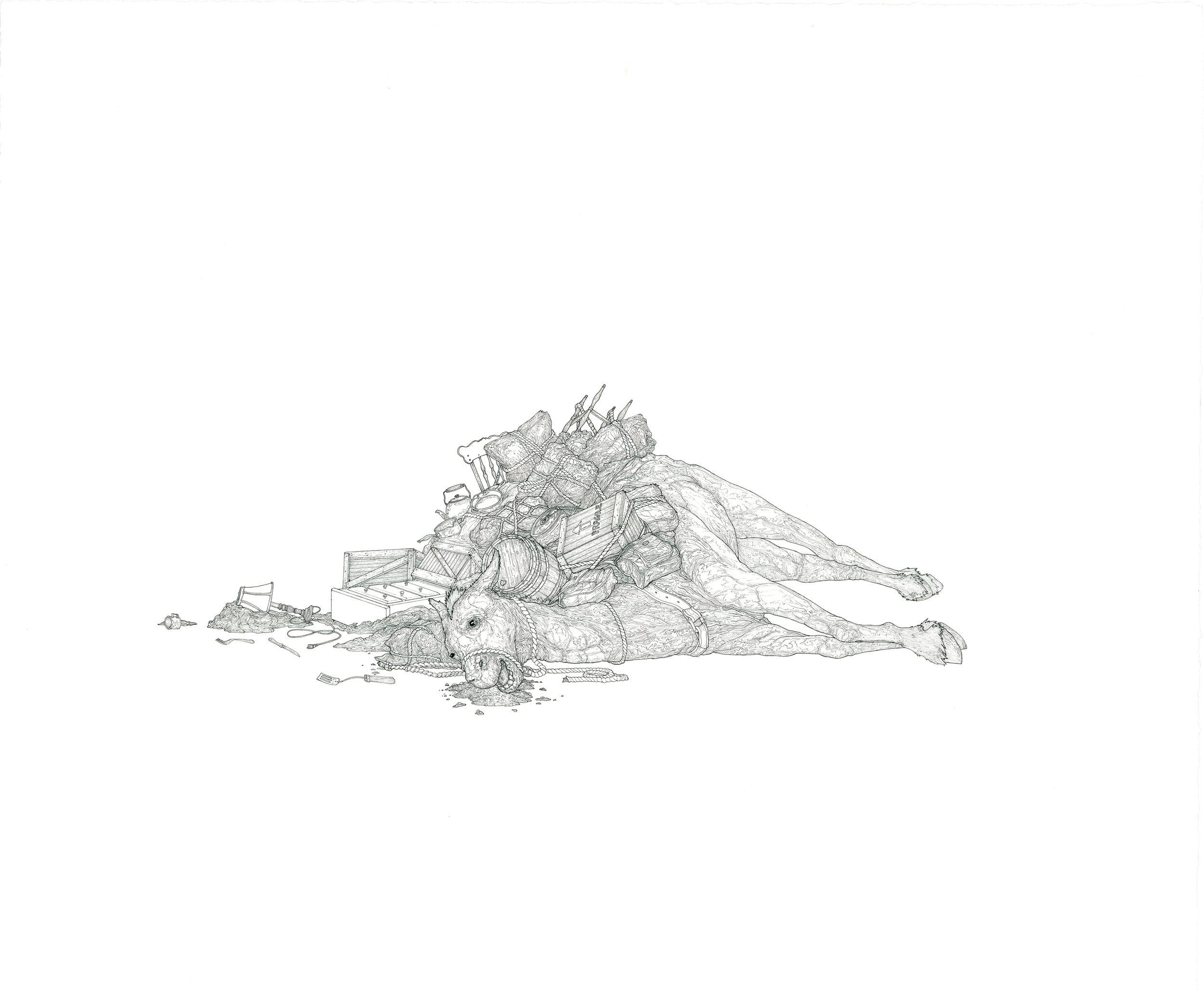 mule,  ink on paper, 25in .  x 17in., 2011