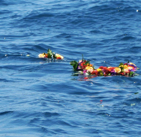 flowers scattered on water.png