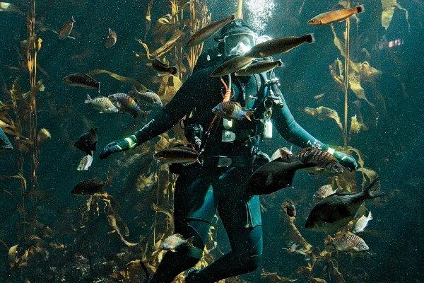 jennifer-dianto-kemmerly-aquarium.jpg