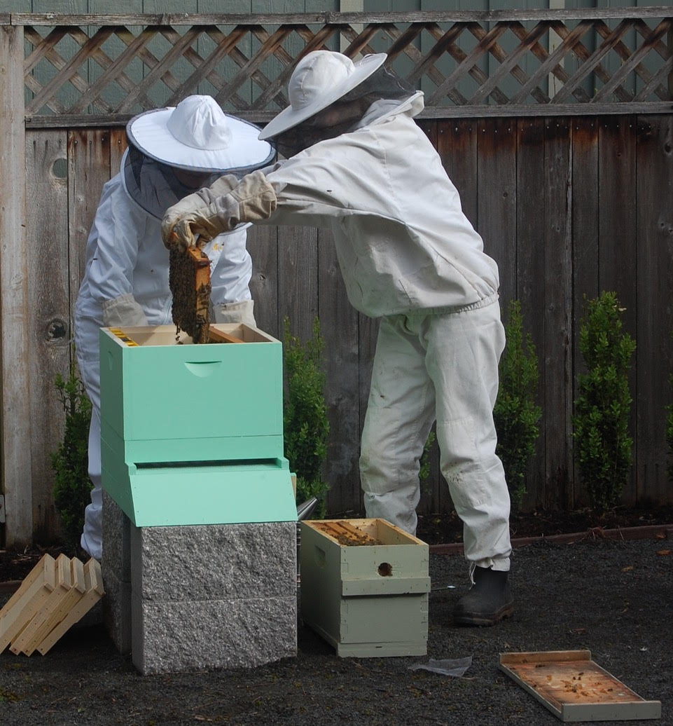 The day Alison installed bees in her first hive.
