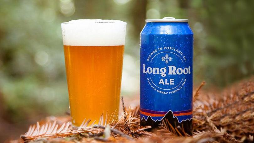 The Long Root Ale from Patagonia is a hearty pale ale brewed with organic two-row barley, organic yeast, organic Chinook, Mosaic and Crystal hops, and Kernza. Photo from Patagonia Provisions.