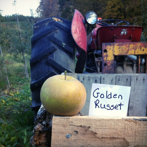 """""""Golden Russett was a very popular apple until it was replaced by its own offspring - the Golden Delicious,"""" says Tim Dressel. """"Golden Russett is a fairly sweet, slightly bitter apple. It makes for good eating but its skin is very brown and rough, almost like sandpaper."""""""