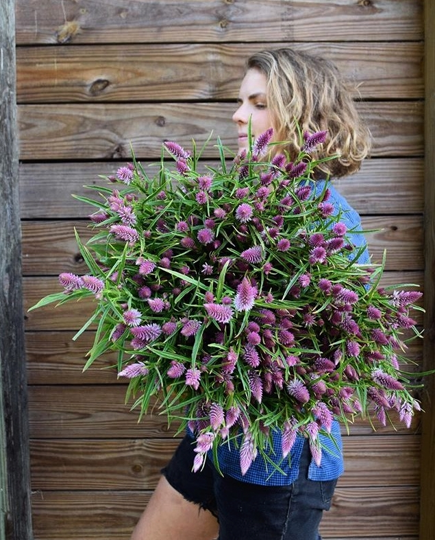 Emily holding a bunch of Flamingo Celosia. Swallowtail grows more than a hundred varieties of flowers for its floral design studio   Ladybug Blooms  , which provides fresh local flowers for weddings, events, and local florists.
