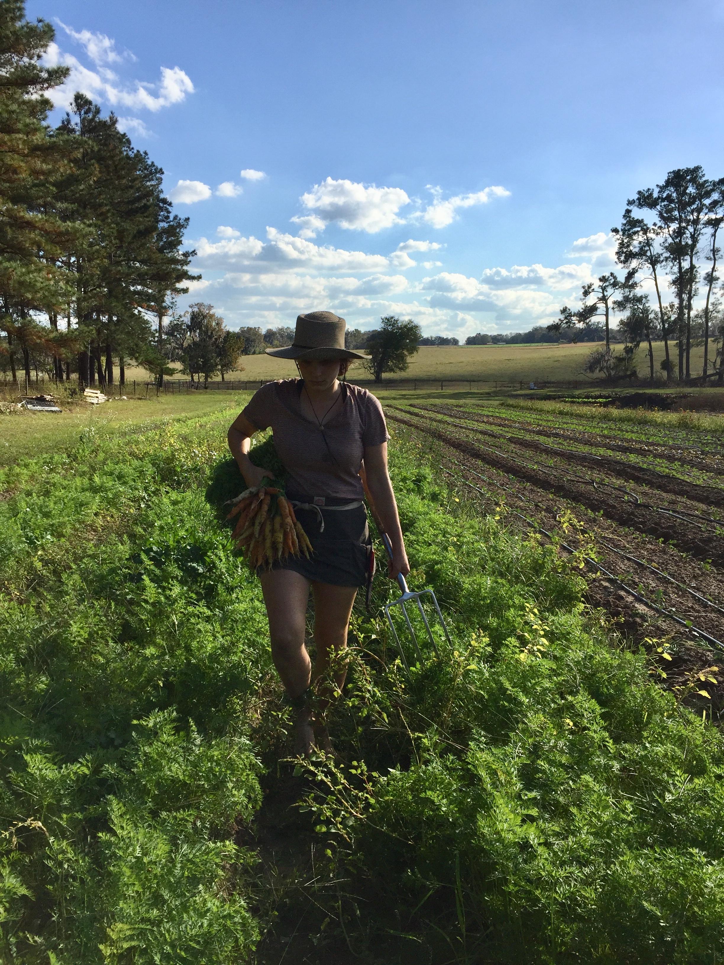 Emily harvesting carrots in springtime.