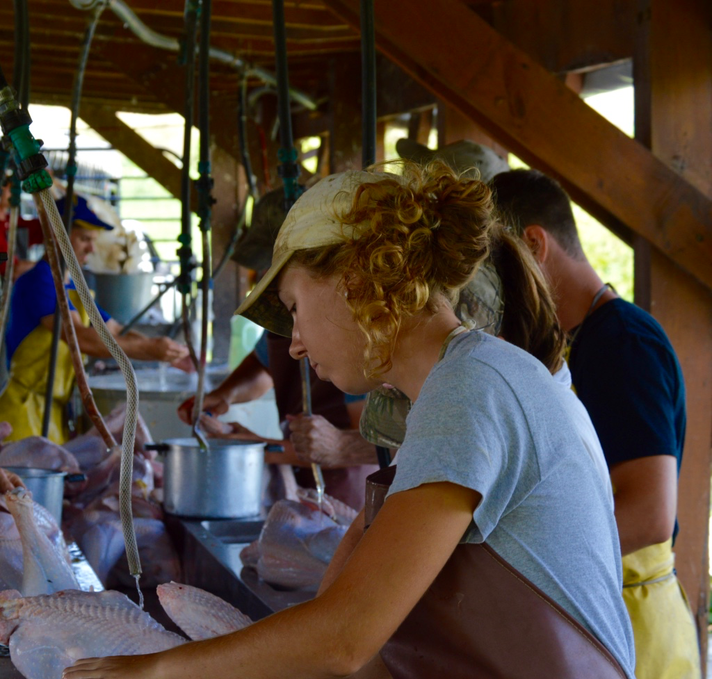 Working at Polyface Farms means taking care of chickens from the beginning to end of their lives.