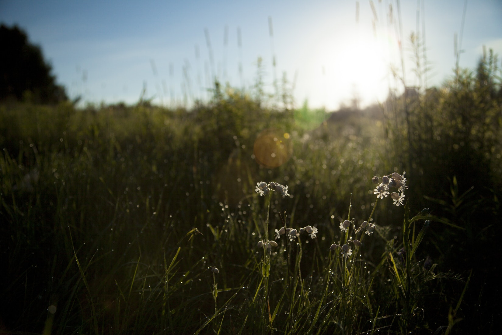 The city of Baltimore is enabling residents to turn abandoned lots into wildflower meadows to help restore diversity,reduce litter, and curb the amount of pollution running into the Chesapeake Bay.