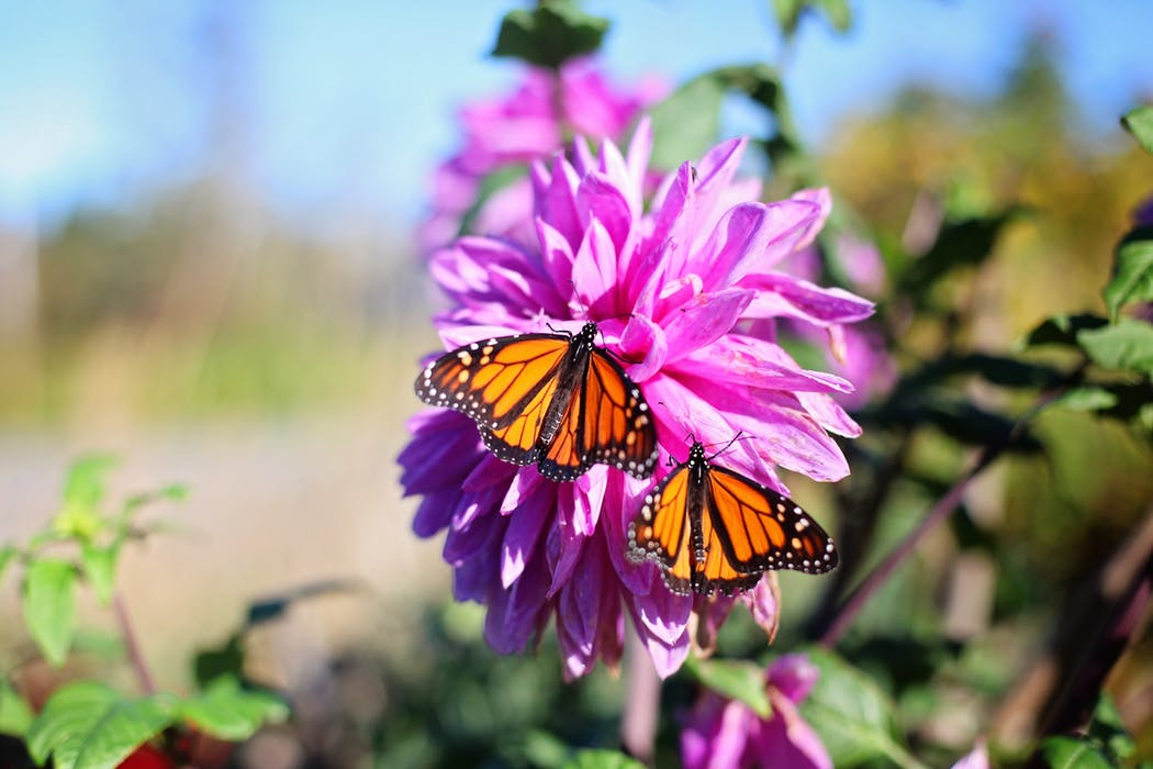 Some insects are also a gardener's friend. Butterflies pollinate your crops. And spiders eat up to 800 million tons of insects each year!
