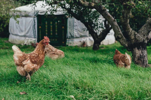 As is often the case in life, chickens become much more interesting once you get to know them.
