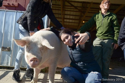 Sheer force of personality has turned Andy, a long-time resident at Farm Sanctuary, into a media darling.