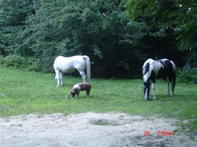 Cici bonded with the horses she discovered after making her break from a pig farm.