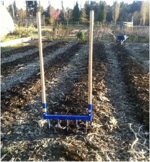 The broad fork is a handy tool for loosening raised beds without disturbing the soil.