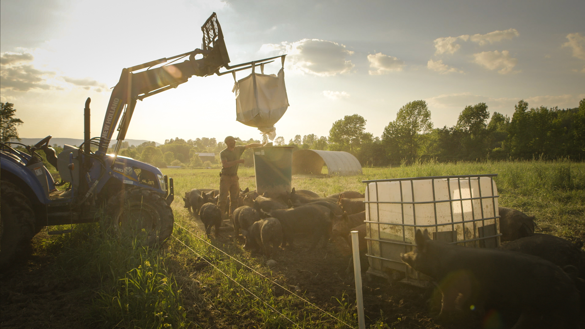 In one of many sweeping landscape shots, farmer Bob Comis feeds his herd.