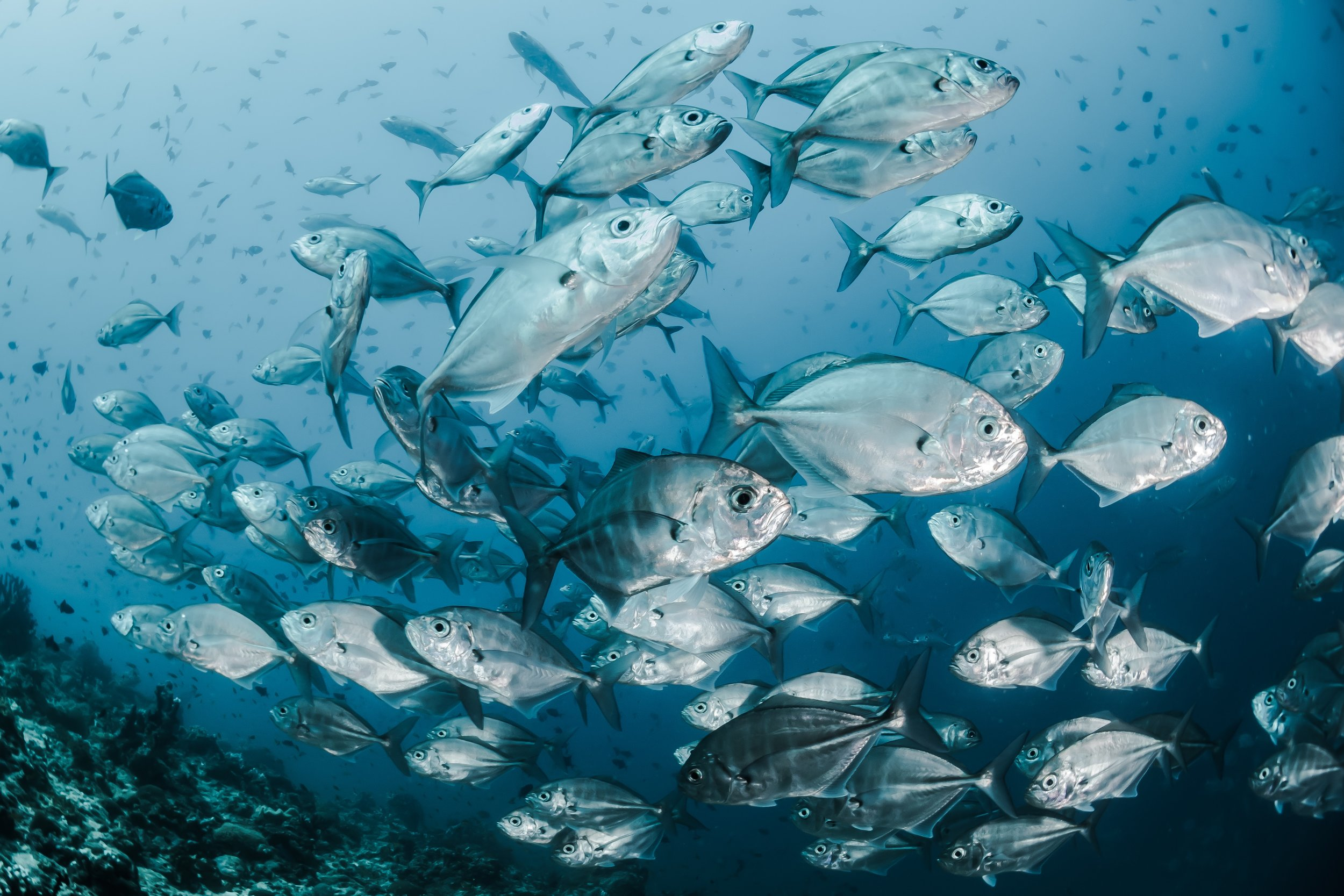New startups are hoping to provide an alternative to conventionally fished seafood by growing seafood in a lab. Ninety percent of wild fisheries are currently classified as overfished or harvested at maximum capacity.  Photo source