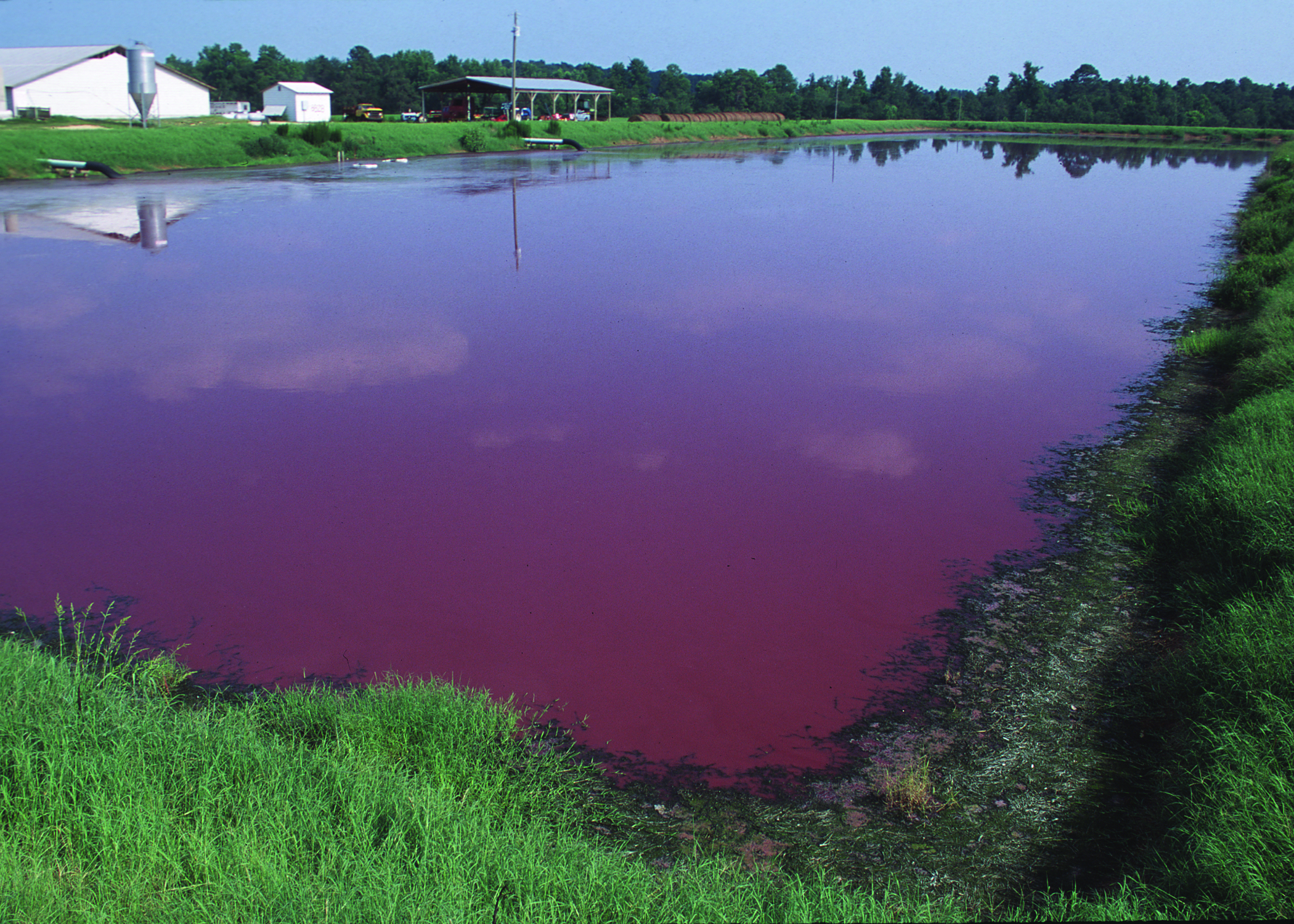 Factory farms contain animal waste in massive open-air lagoons that run the risk of leaking and breaking, contaminating surrounding air and water.  Image source