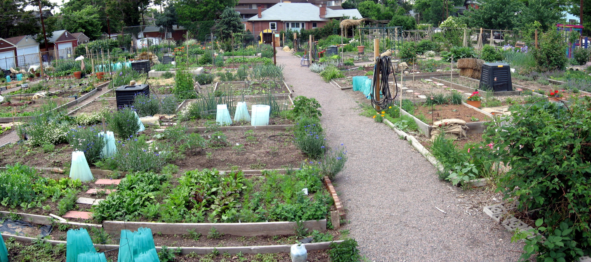 Many cities offer community gardens plots for citizens to use at little to no cost.  Photo Source.