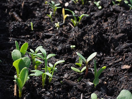Soil health is crucial for hearty, strong plants.  Image source
