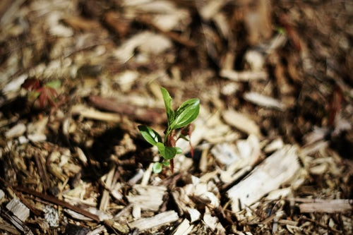 Spreading mulch in spring can inhibit weed growth. Applying it in the fall can protect your plants through the harsh winter season.  Image source