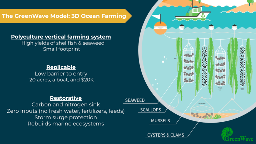 GreenWave teaches new seaweed growers how to farm sustainably by practicing vertical ocean farming. (photo from  GreenWave )