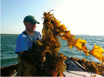 Atlantic Seafood Paul Dobbins, farming sugar kelp in Southern Maine (photo from  Soundings )