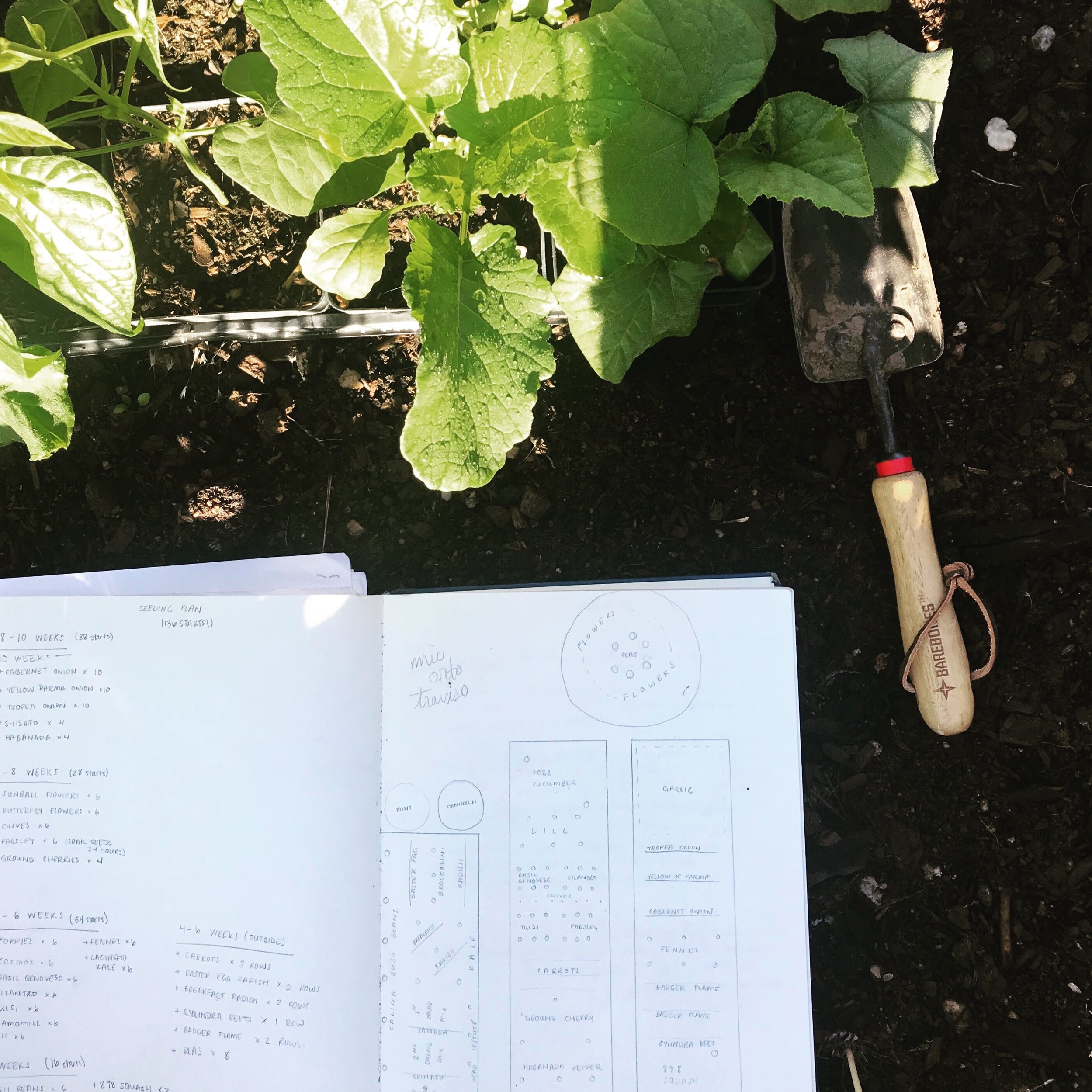 Grab a ruler, pencil, and paper! Sketching out what your garden is going look like will become a helpful reference throughout your growing season.