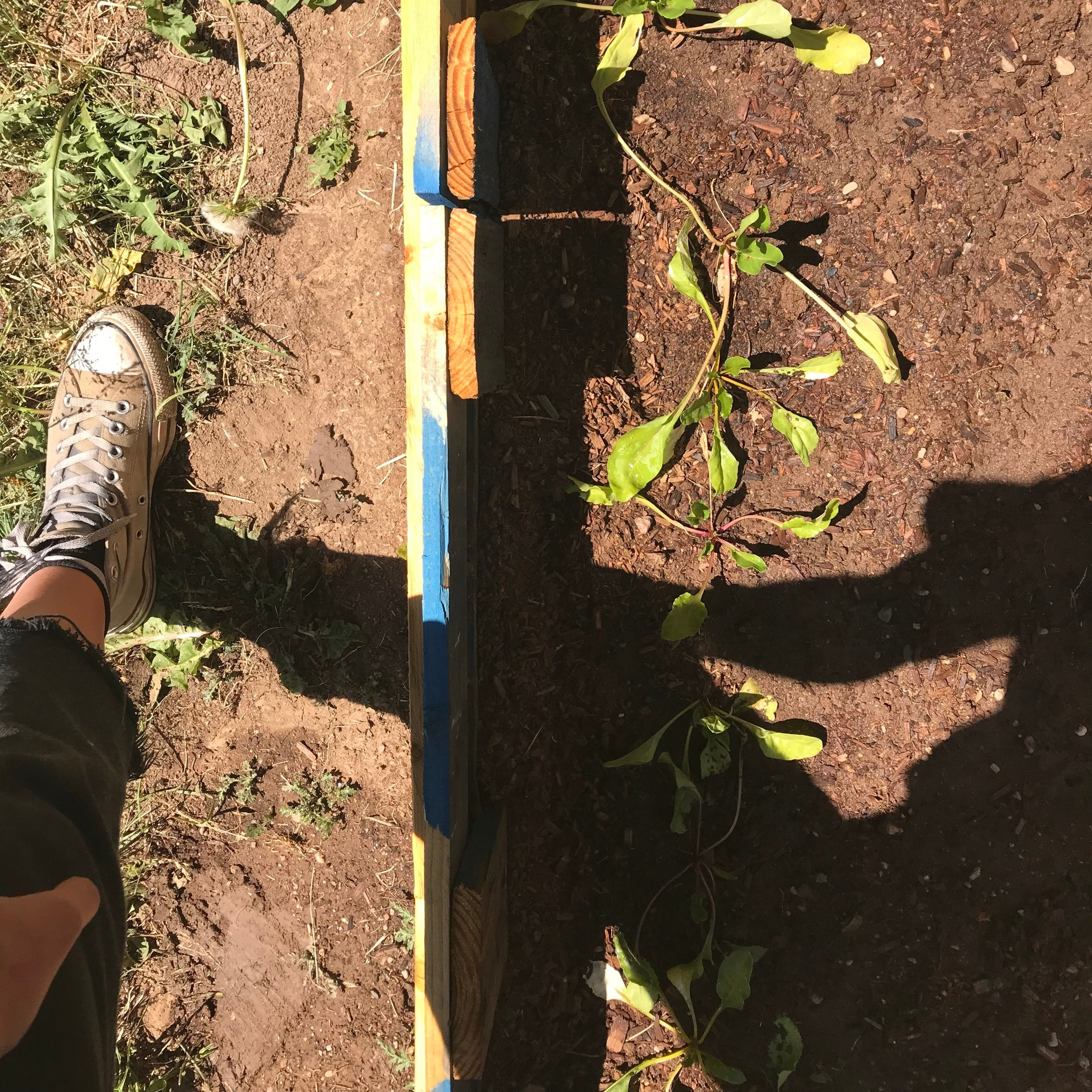 On the left — sad soil. On the right — happy soil filled with compost. All that's left to do is mulch!
