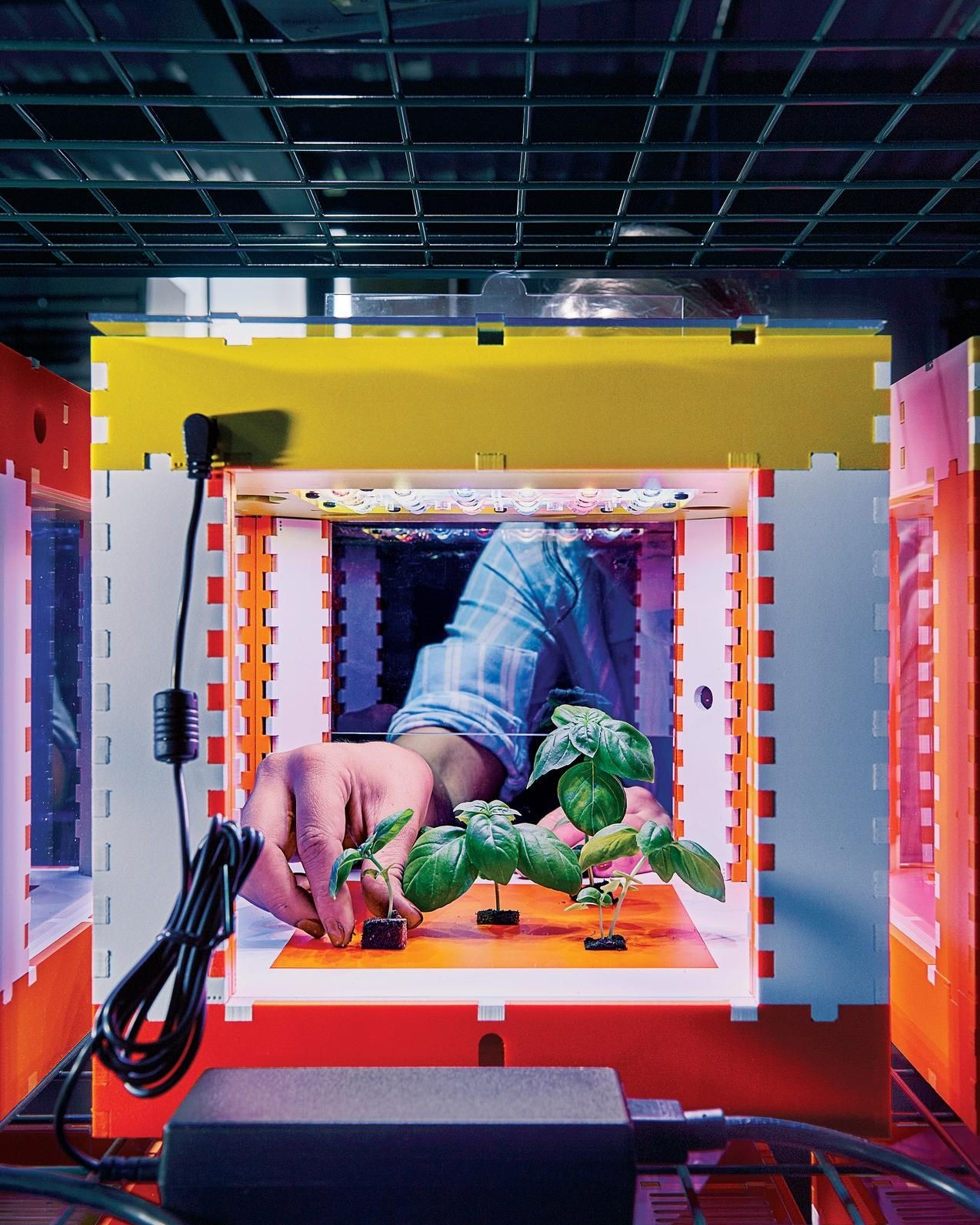 "Researchers at MIT's OpenAg project grow basil inside ""food computers,"" which allow them to control climate variables so they develop better plants. Photo from Tony Luong for the  Wall Street Journal ."