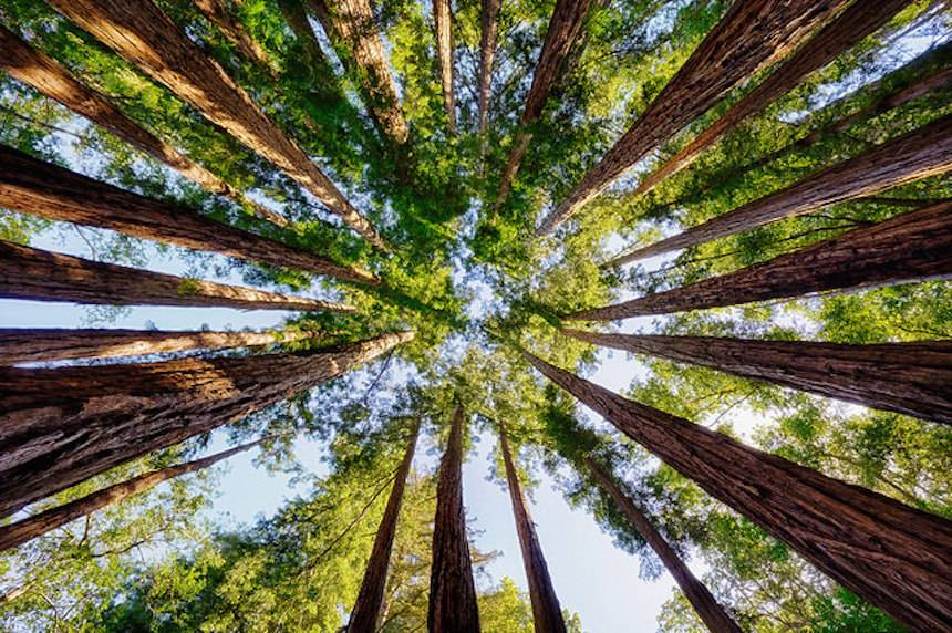 Trees absorb atmospheric carbon dioxide, sequester the carbon, and produce oxygen. A new study says we'd have to plant billions more to slow global warming. (Image via  Tree Hugger )