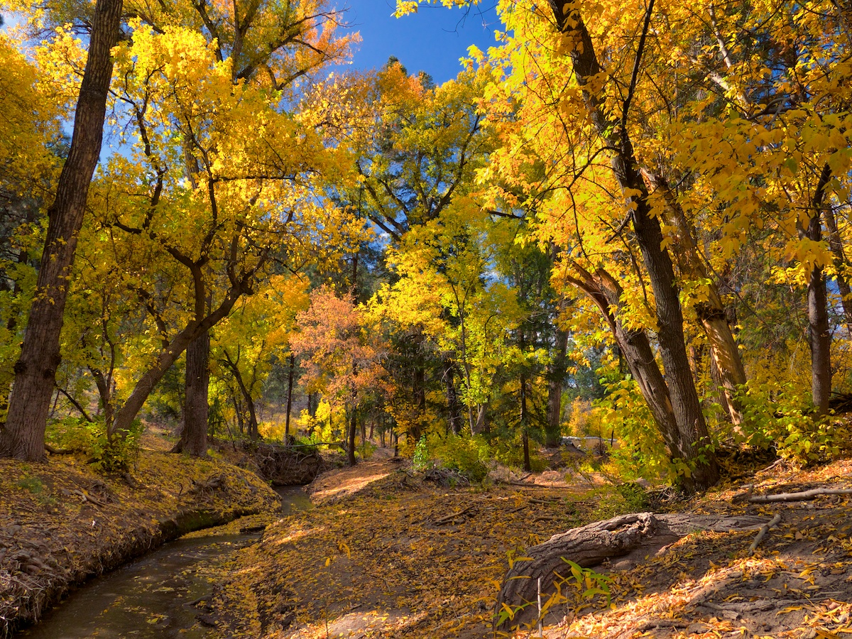 Yellow Tree Creek.jpg