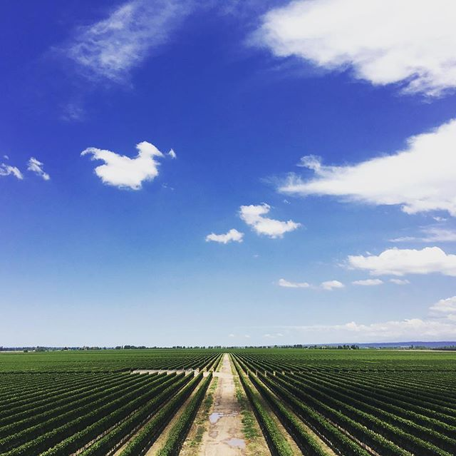 Lovely 🍷 #mendoza #wine #wineries #vineyard