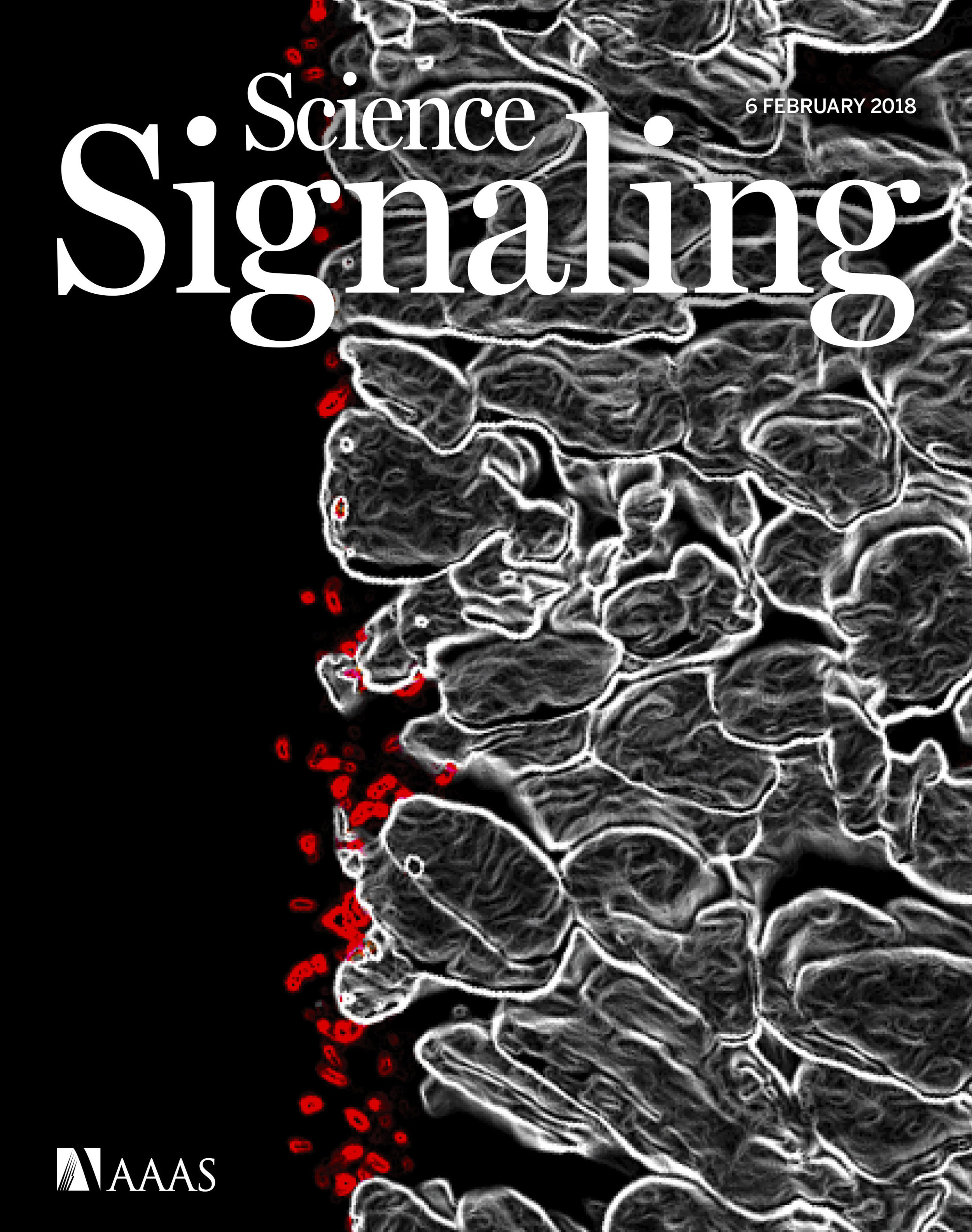Science_signaling_cover.jpg
