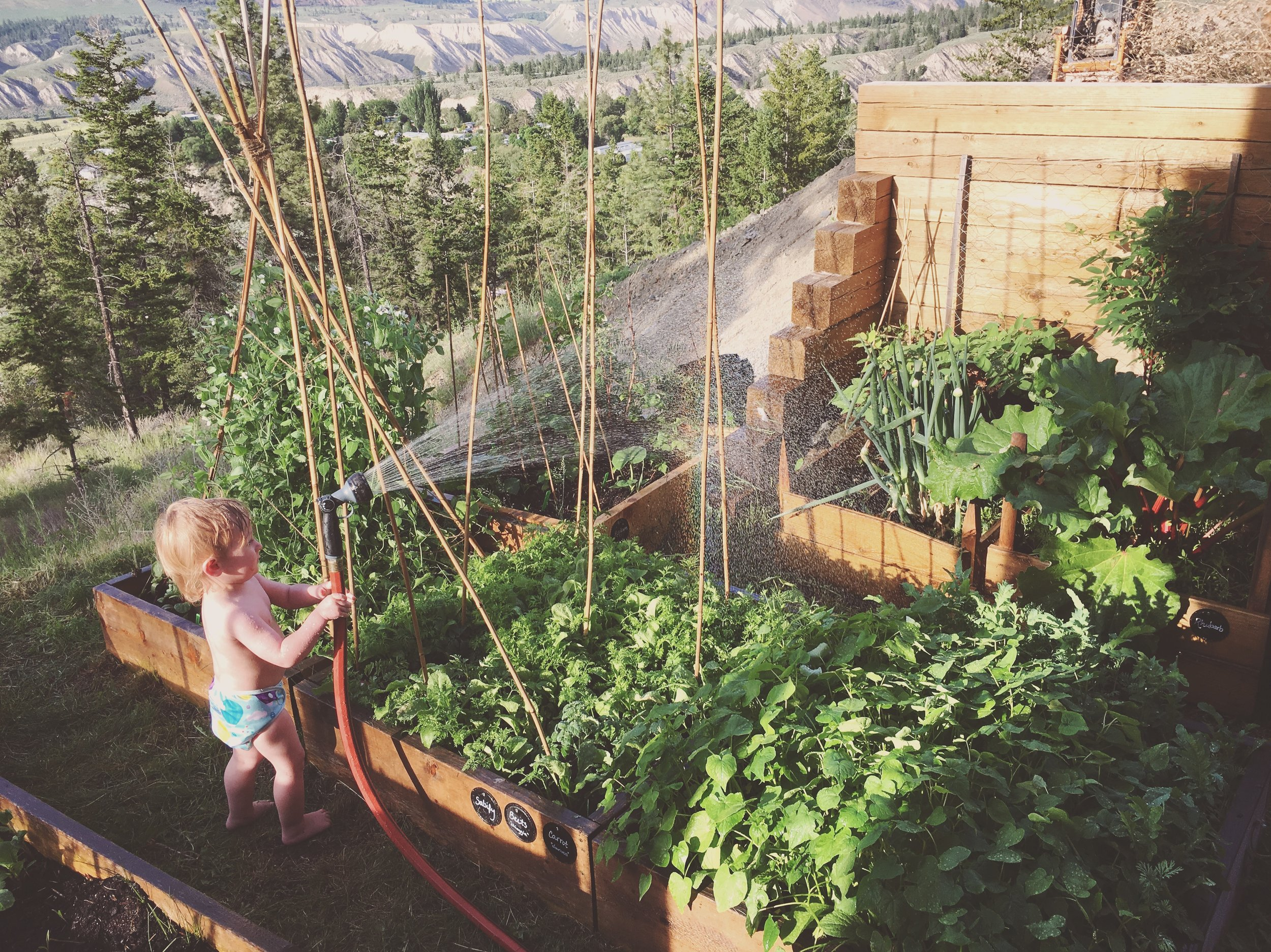 Little Forager watering the garden in his awesome swim diaper from  Nuggles .