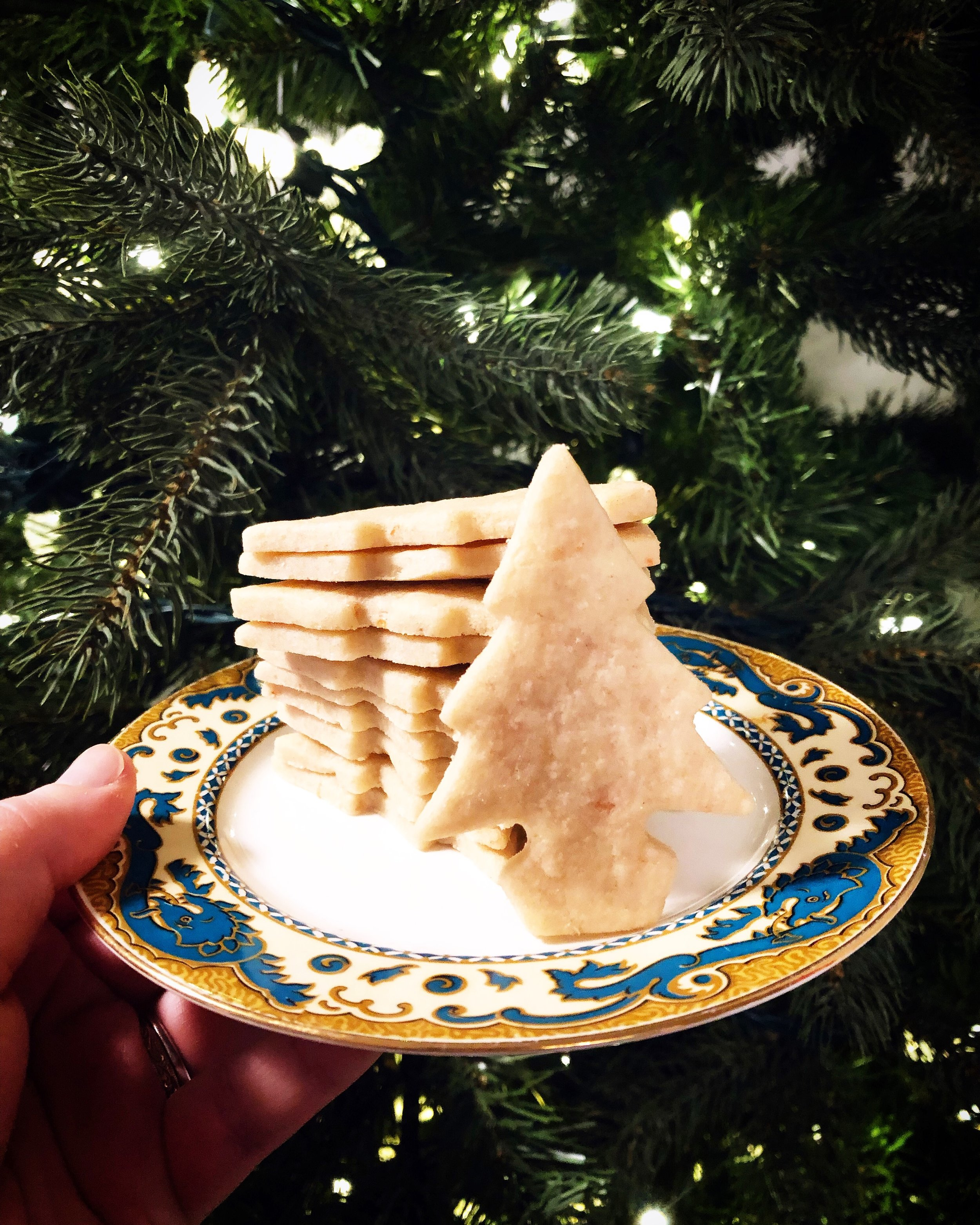 Douglas-fir might be a common choice for Christmas trees, but the one behind this plate of cookies is an artificial tree so don't use this as an example if you're trying to make a positive ID!