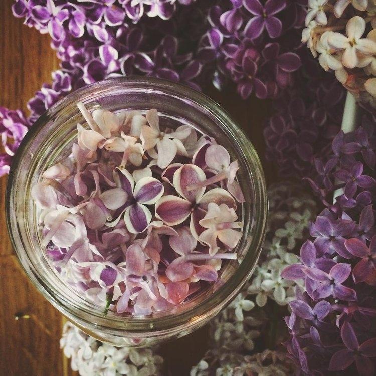 lilacs2016-02.jpg