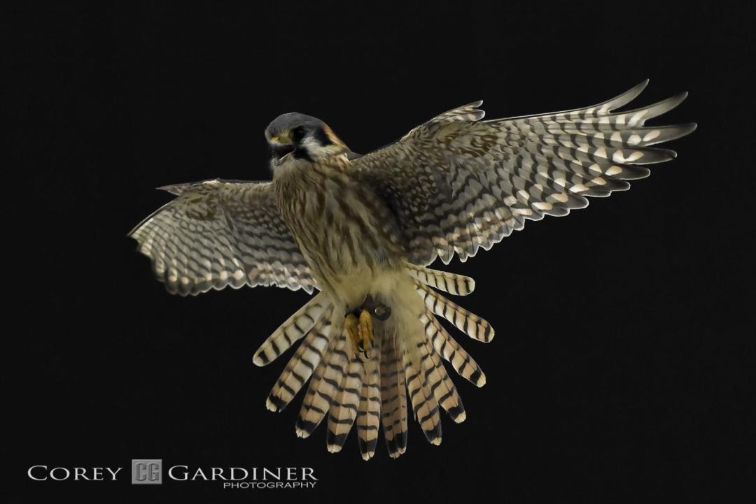 canadian-raptor-conservancy-2016-web-use-10