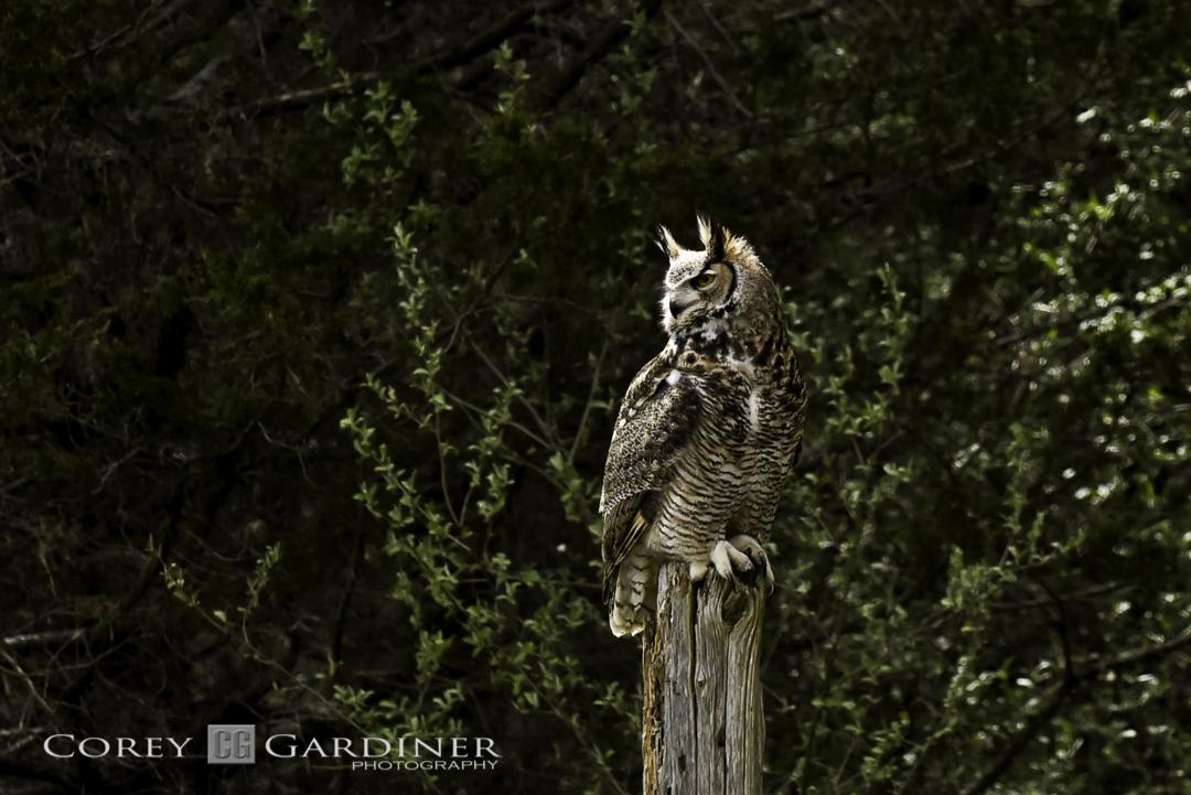 canadian-raptor-conservancy-2016-web-use-13