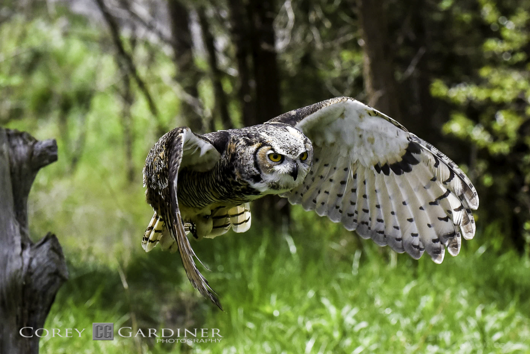 canadian-raptor-conservancy-2016-web-use-14