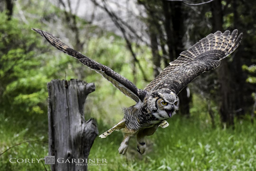 canadian-raptor-conservancy-2016-web-use-15