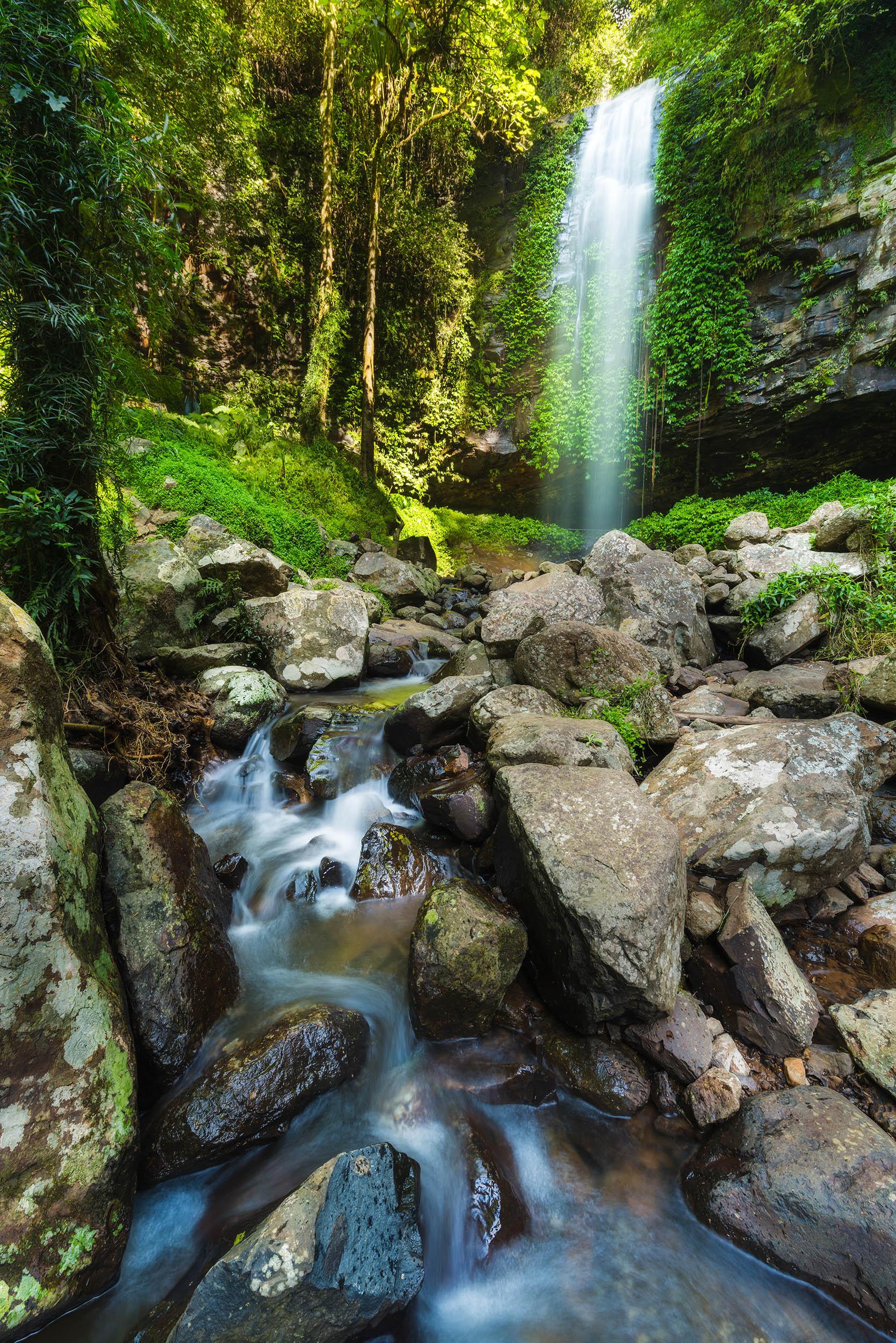 The majestic Crystal Shower Falls in Dorrigo National Park.