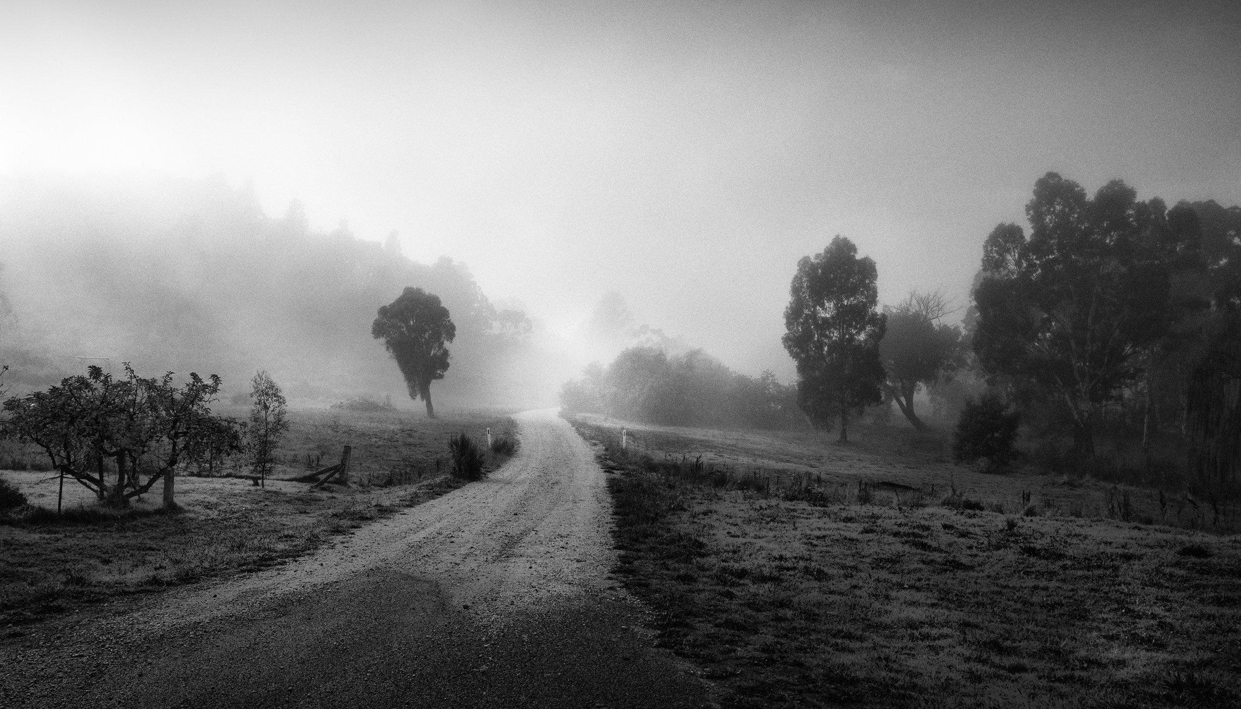 Foggy lane (1).jpg